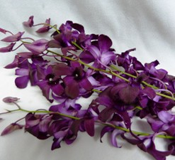 Burgundy Dendrobium 10 per Bunch